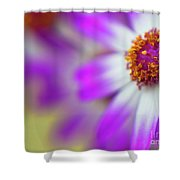 Purple Spring 12 Shower Curtain