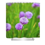 Purple Spring 14 Shower Curtain