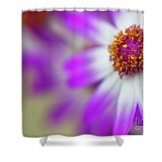 Purple Spring 7 Shower Curtain
