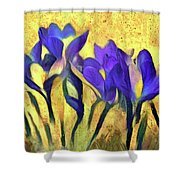 Purple Spring Crocus Flowers Shower Curtain