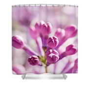Purple Spring Lilac Flowers Blooming Close-up Shower Curtain