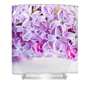 Purple Spring Lilac Flowers Blooming Shower Curtain