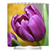 Purple Spring Shower Curtain