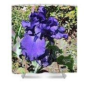 Purple Springtime Iris  Shower Curtain