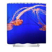 Purple Striped Jelly Shower Curtain