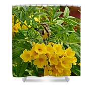 Purple Sunbird Shower Curtain