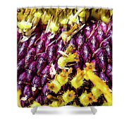Purple Sunflower Seeds Shower Curtain