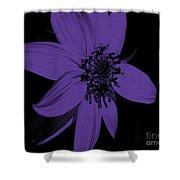 Purple Sunflower Shower Curtain