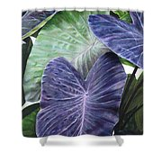 Purple Taro Shower Curtain