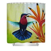 Purple-throated Carib And Bird Of Paradise Shower Curtain