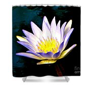 Purple Tipped Water Lily Shower Curtain