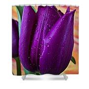 Purple Tulip Shower Curtain by Garry Gay