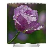 Purple Tulip Shower Curtain