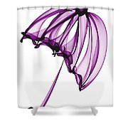 Purple Umbrella Shower Curtain