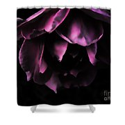 Purple Velvet Rose Shower Curtain