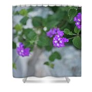 Purple Verbena Shower Curtain