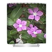 Purple Vintas Flower Photograph Shower Curtain
