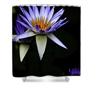 Purple Waterlily Shower Curtain