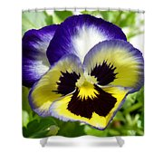 Purple White And Yellow Pansy Shower Curtain