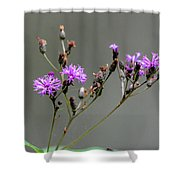 Purple Wildflower In Shiloh National Military Park, Tennessee Shower Curtain
