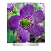 Purple Wildflowers Macro 1 Shower Curtain