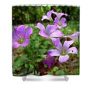 Purple Wildflowers Macro 2 Shower Curtain