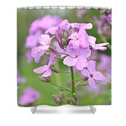 Purple Wildflowers Two Shower Curtain
