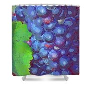 Purple Wine Grapes 2017 Shower Curtain