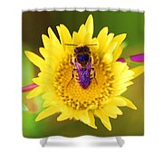 Purple Wings Shower Curtain