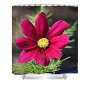 Purple Wood Aster  Shower Curtain
