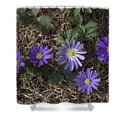Purple Yard Flowers Shower Curtain