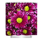 Purple Yellow Flowers Shower Curtain
