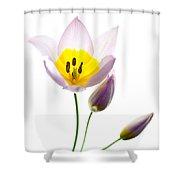 Purple Yellow Tulip 2 Shower Curtain