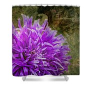 Purple Zinnia Shower Curtain by Rod Sterling