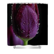 Purplelicious Shower Curtain by Tracy Hall