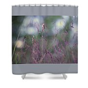 Purpletop, Tridens Flavus, A Native Grass Species, East Coast, United States. Shower Curtain