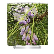 Pushing Though Or Wisteria And Long Needle Pine Shower Curtain