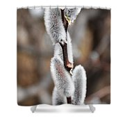 Pussy Willow 1 Shower Curtain