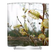 Pussy Willow Blossoms Shower Curtain