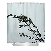 Pussy Willow Catkins Shower Curtain