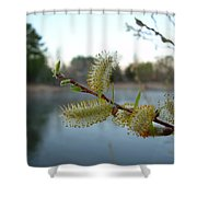 Pussy Willow Flowers Shower Curtain