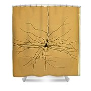 Pyramidal Cell In Cerebral Cortex, Cajal Shower Curtain