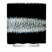 Pyrosome Shower Curtain