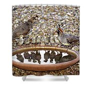 Quail Family Gathering Az Shower Curtain