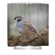 Quail On The Rocks Shower Curtain