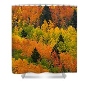 Quaking Aspen And Ponderosa Pine Trees Shower Curtain