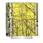 Quaking Aspen Fall Shower Curtain