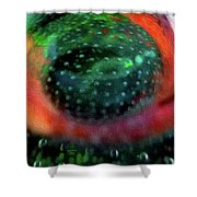 Quantum Theory Shower Curtain