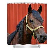 Quarter Horse Shower Curtain by Sandy Keeton