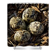 Quartet Of Killdeer Eggs By Jean Noren Shower Curtain